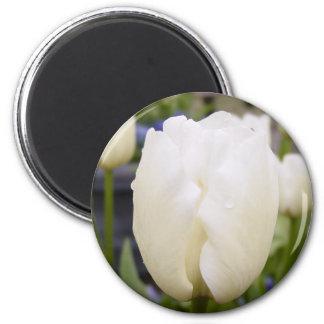 White Tulip 6 Cm Round Magnet
