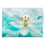 White Tulip Flower Blue Water Pond Aqua Turquoise