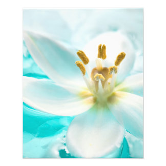 White Tulip Flower Blue Water Pond Aqua Turquoise Photographic Print