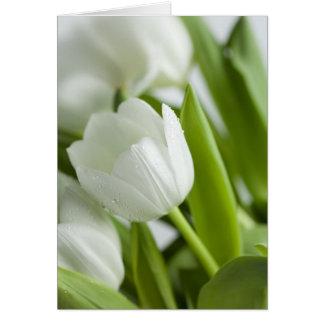 White Tulips Card