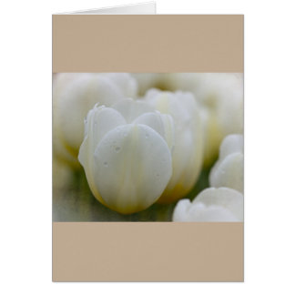 White Tulips with Morning Dew Cards