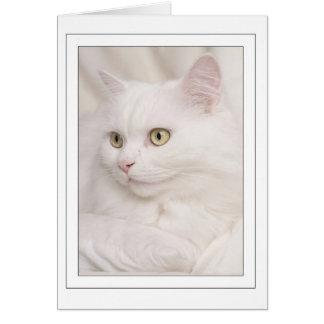White Turkish angora tomcat Card