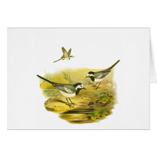 White Wagtail Card