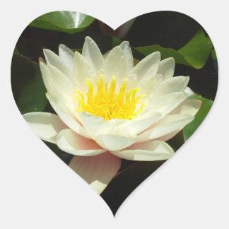 White Water Lily Flower Heart Sticker