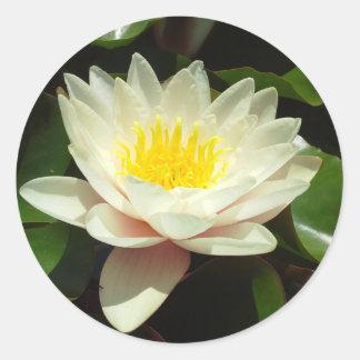 White Water Lily Flower Round Sticker
