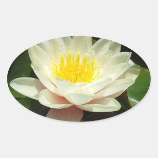 White Water Lily Flower Sticker
