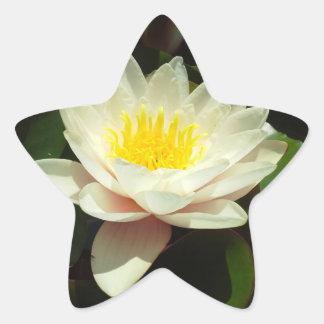 White Water Lily Flower Star Sticker