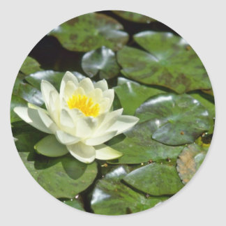 White Water Lily On Pads flowers Round Sticker
