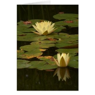 White Waterlilies Card