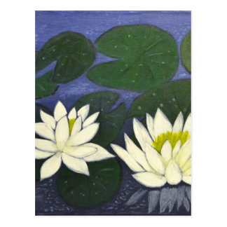 White Waterlily Flowers in a Pond. Postcard