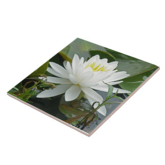 White Waterlily Wildflower Large Square Tile