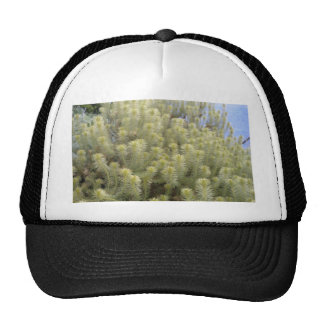 White weeds hats