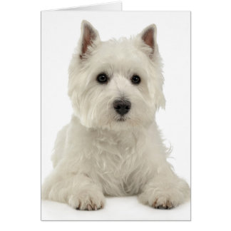 White West Highland Terrier Puppy Dog Westie Card