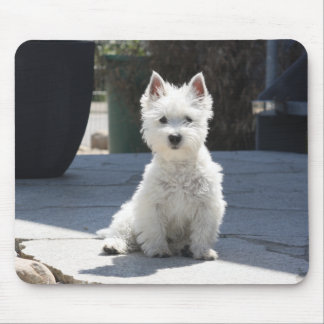 White West Highland Terrier Sitting on Sidewalk Mouse Pad