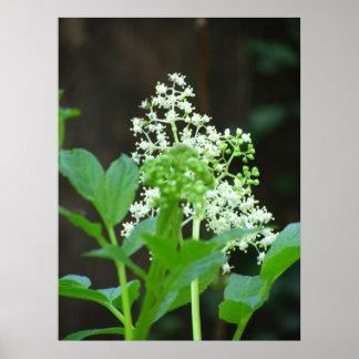 White Wild Flower Print