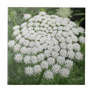 White Wild Flower Queen Anne's Lace Ceramic Tile