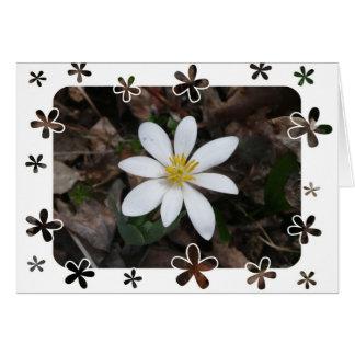 White wildflower cards