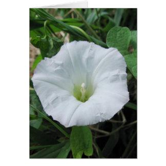 White Wildflower Note Card