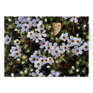 White Wildflower Notecard