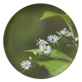White Wildflower Party Plates