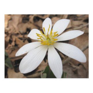 White Wildflower Postcard
