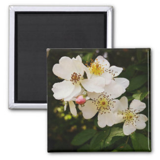 White Wildflowers 2 Inch Square Magnet