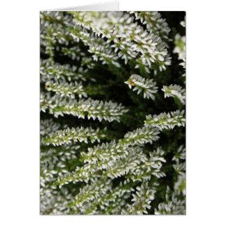 White Wildflowers Cards