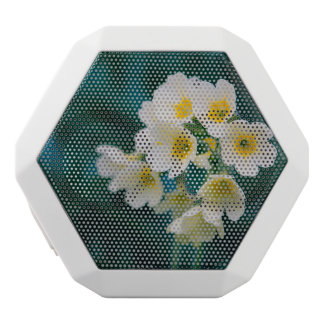 White Wildflowers On A Teal Background