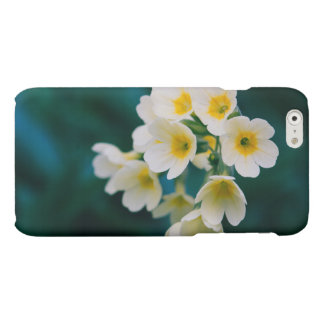 White Wildflowers On A Teal Background Matte iPhone 6 Case