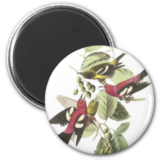 White-winged Crossbill Refrigerator Magnets
