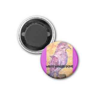 White-winged Dove art 3 Cm Round Magnet