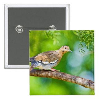 White-winged Dove Zenaida asiatica) adult, 15 Cm Square Badge
