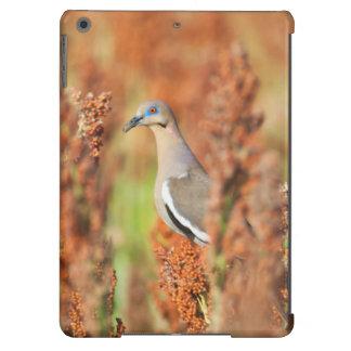 White-Winged Dove (Zenaida Asiatica) Perched iPad Air Cases