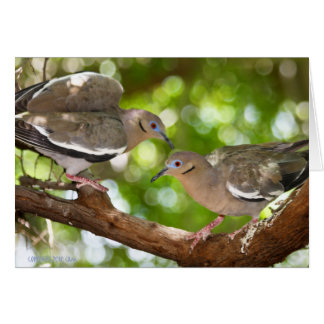 White-Winged Doves Greeting Card