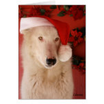 White Wolf Christmas Card