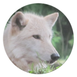 White Wolf Face Party Plates