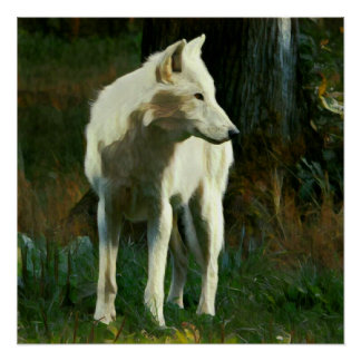 White Wolf Painting Poster