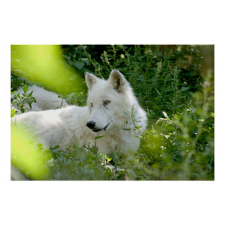 White Wolf Posters