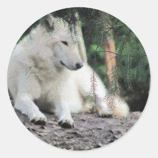 White Wolf Resting Classic Round Sticker