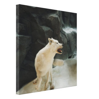 White Wolf Stretched Canvas Prints