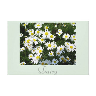 White Yellow Daisy Flower Art Nature Photography 2 Stretched Canvas Print