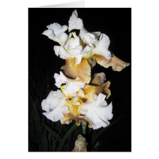 White Yellow Iris At Dusk Note Card