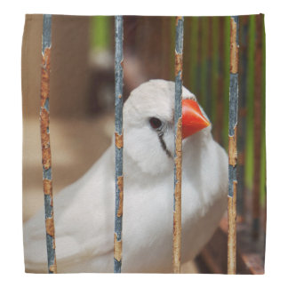 White Zebra Finch Bird in Cage Bandana