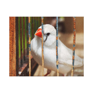 White Zebra Finch Bird in Cage Canvas Print