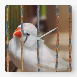 White Zebra Finch Bird in Cage Square Wall Clock
