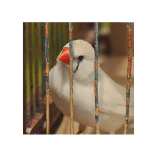 White Zebra Finch Bird in Cage Wood Wall Art