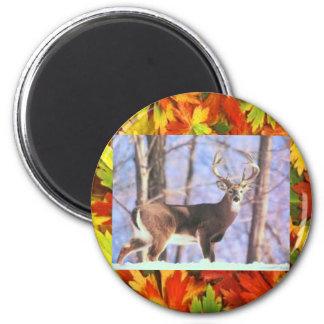 whiteailed deer magnet