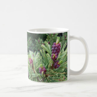 Whitebark Pine Cone Mug