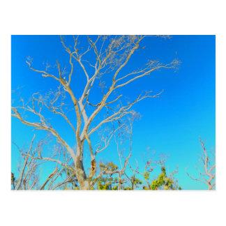 ☼Whitehaven Beach feeling☼ Postcard