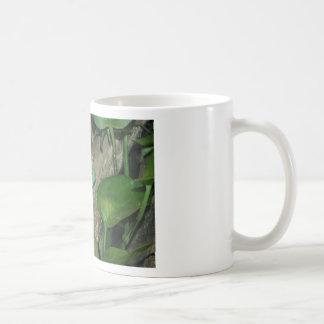 White's Tree Frog, Dumpy Frog Basic White Mug